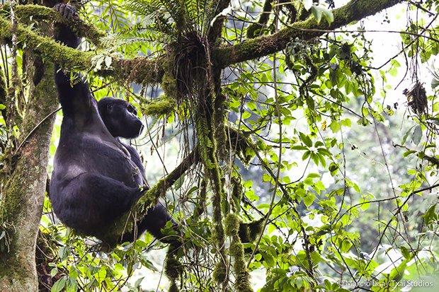 Marcio Lisa Natureza Selvagem Subaquática